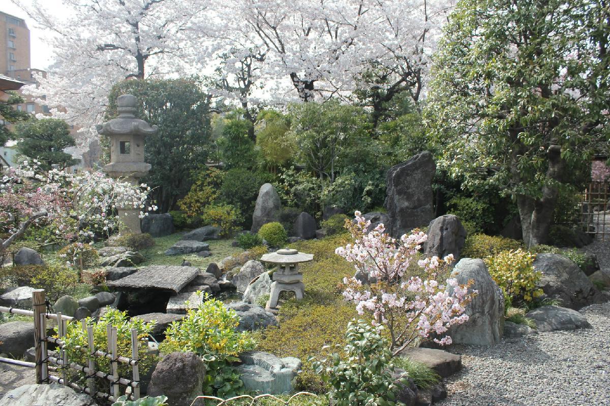 114 - Japanese blossom - Eric Pignolo.JPG