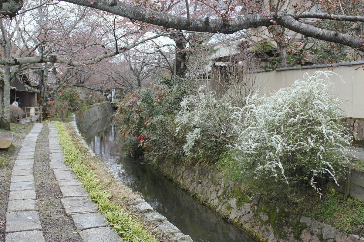 037 - Japanese blossom - Eric Pignolo.JPG