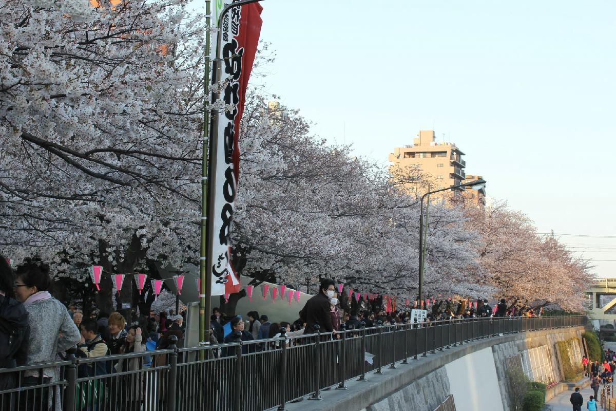 063 - Japanese blossom - Eric Pignolo.JPG