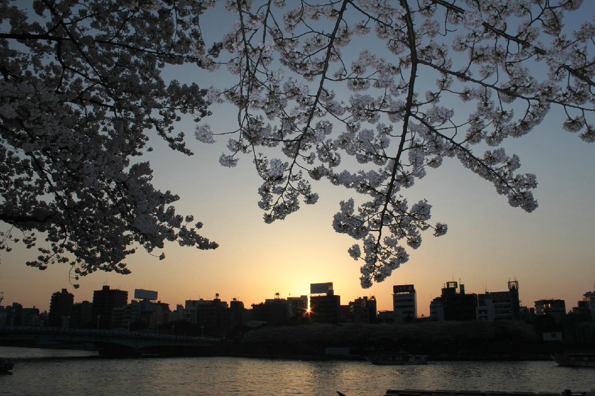 070 - Japanese blossom - Eric Pignolo.JPG