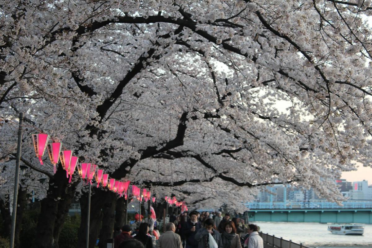 071 - Japanese blossom - Eric Pignolo.JPG