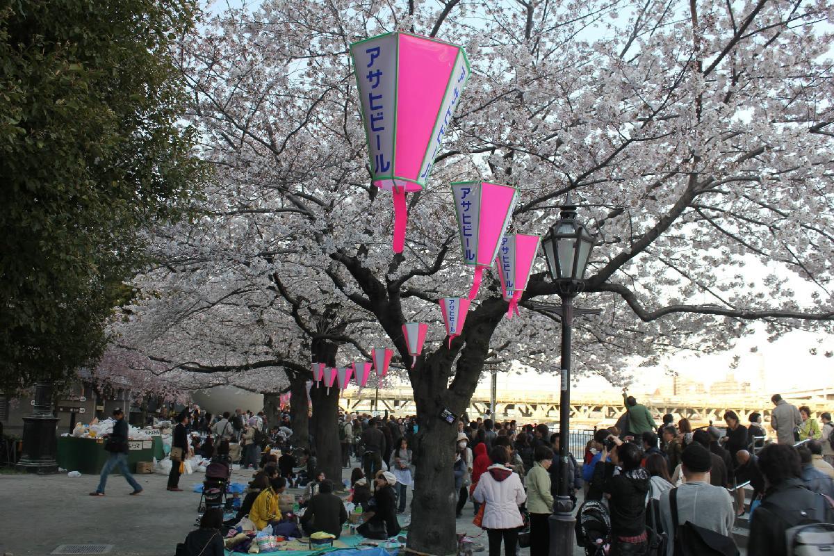 060 - Japanese blossom - Eric Pignolo.JPG