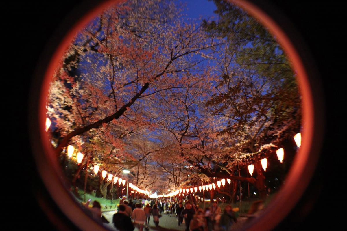 123 - Japanese blossom - Eric Pignolo.JPG