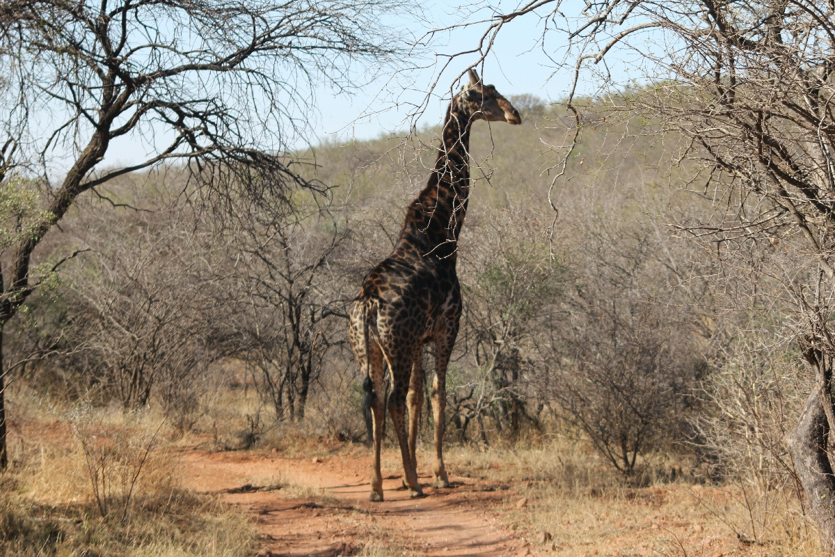 058 - Eric Pignolo - Southern Africa 201