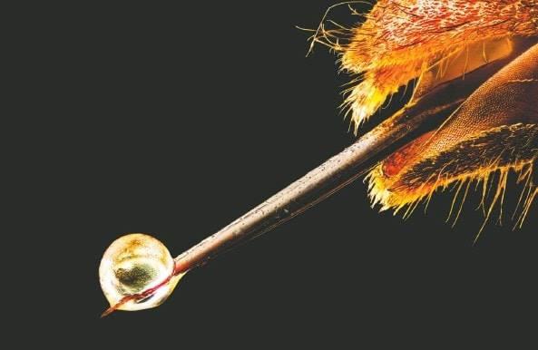 Le venin d'abeille