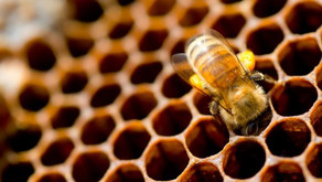 Pourquoi les alvéoles des abeilles ont-elle une forme hexagonales ?