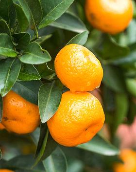 raspberry mandarin.jpg