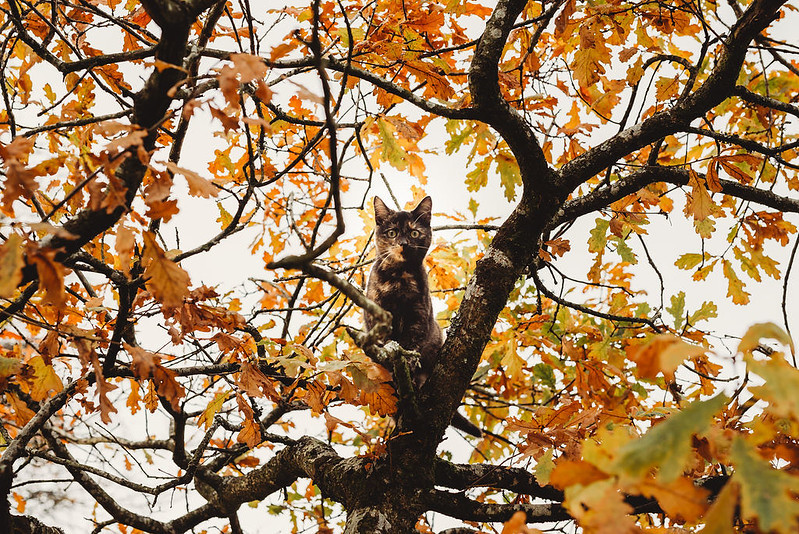 Cat in a tree in autumn