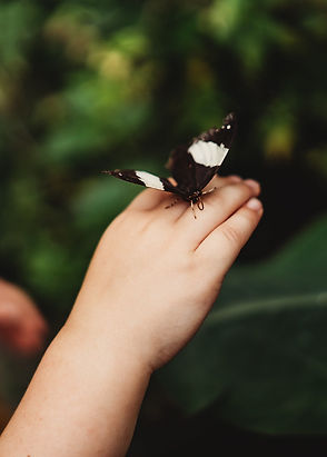 butterfly on hand photoshoot dublin
