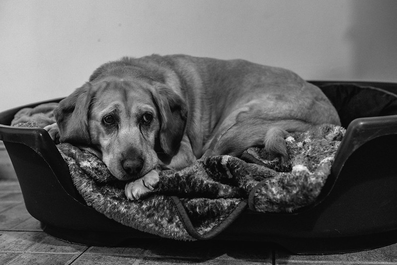 marie o mahony photography black and white portrait of a dog