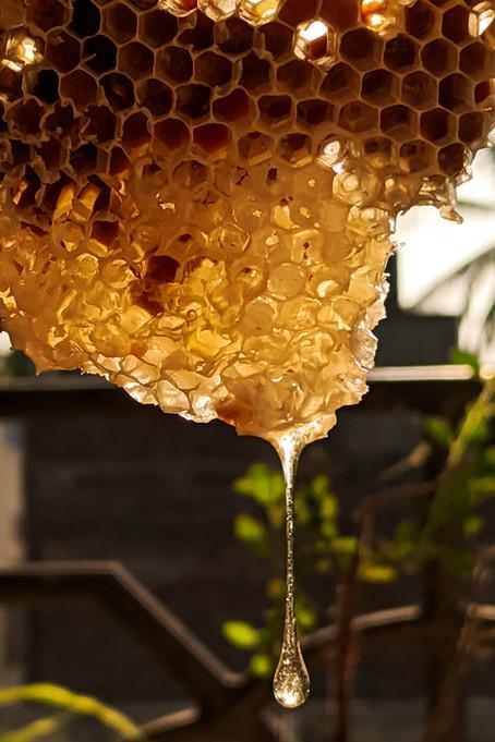 Los beneficios de la apicultura van mucho más allá de la miel