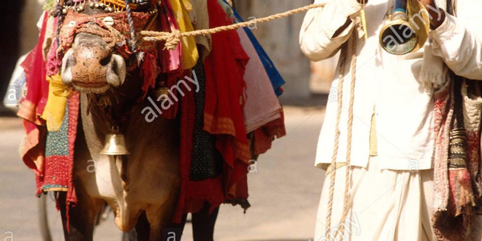 Cows, Curry & Caste: Seeking a Hindu Identity