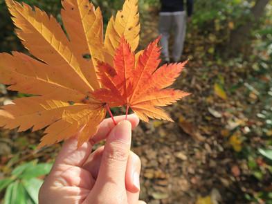 在冬天來臨之前 - 紅葉季節