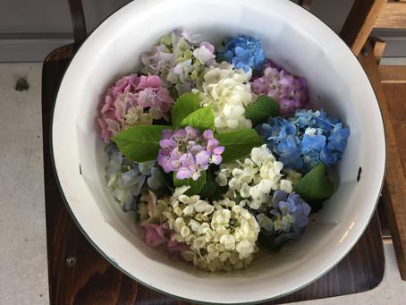 Love it ! 紫陽花