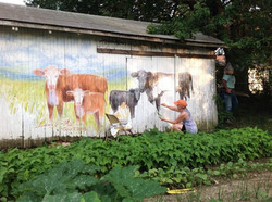 Painting mural of cows
