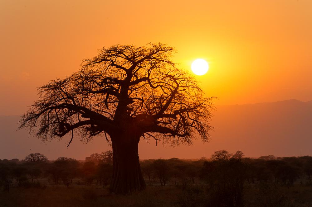 Africa Baobab landscape