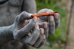 wild life tanzania