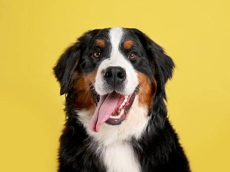Tips for Choosing a Dog Boarder