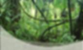 Rainforest Experience