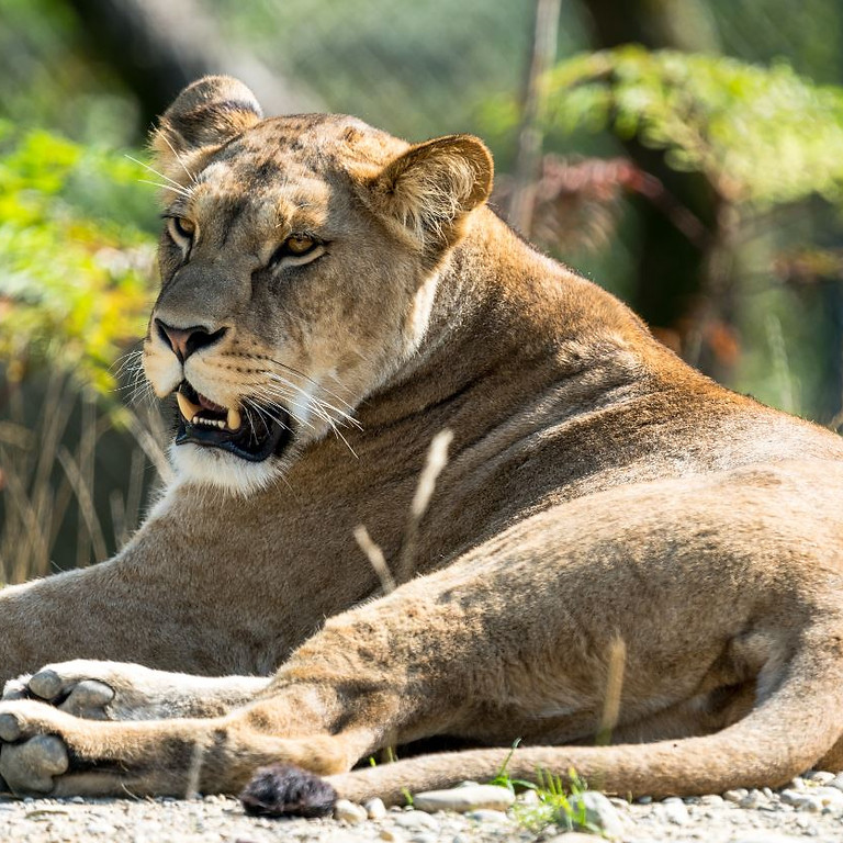 Photography course in the Walterzoo Gossau