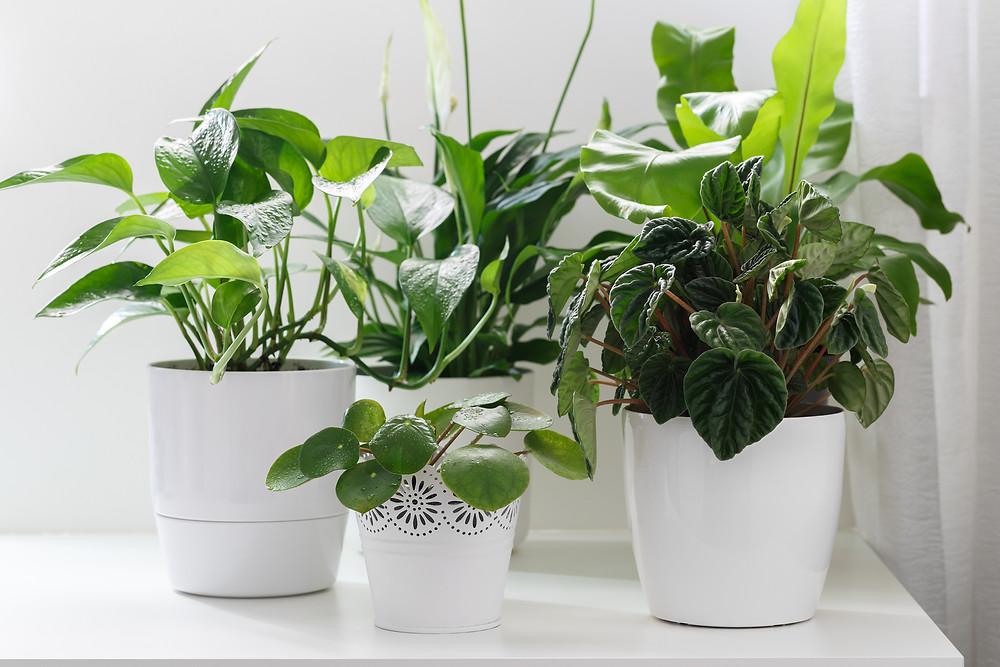 Plants improve air quality