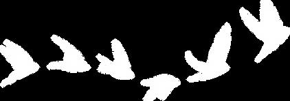 Flying Birds WHITE.png