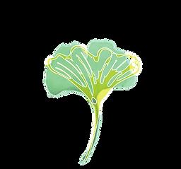 Illustrated Ginkgo Leaf