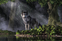 Forest and Wolf.jpg