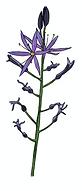 flowerone.png