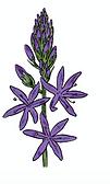 flowerthree.png