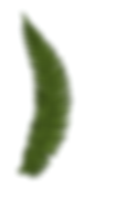 fern1.png