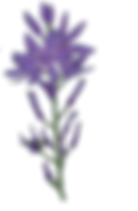 flowertwo.png
