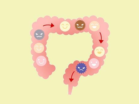 【ミニアンケート結果】『乳酸菌』とってる?