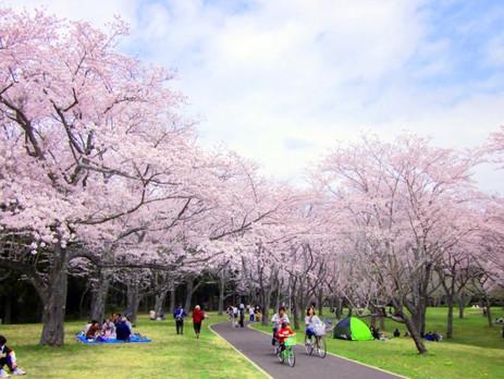 【ミニアンケート結果】『春の楽しみ』教えて!