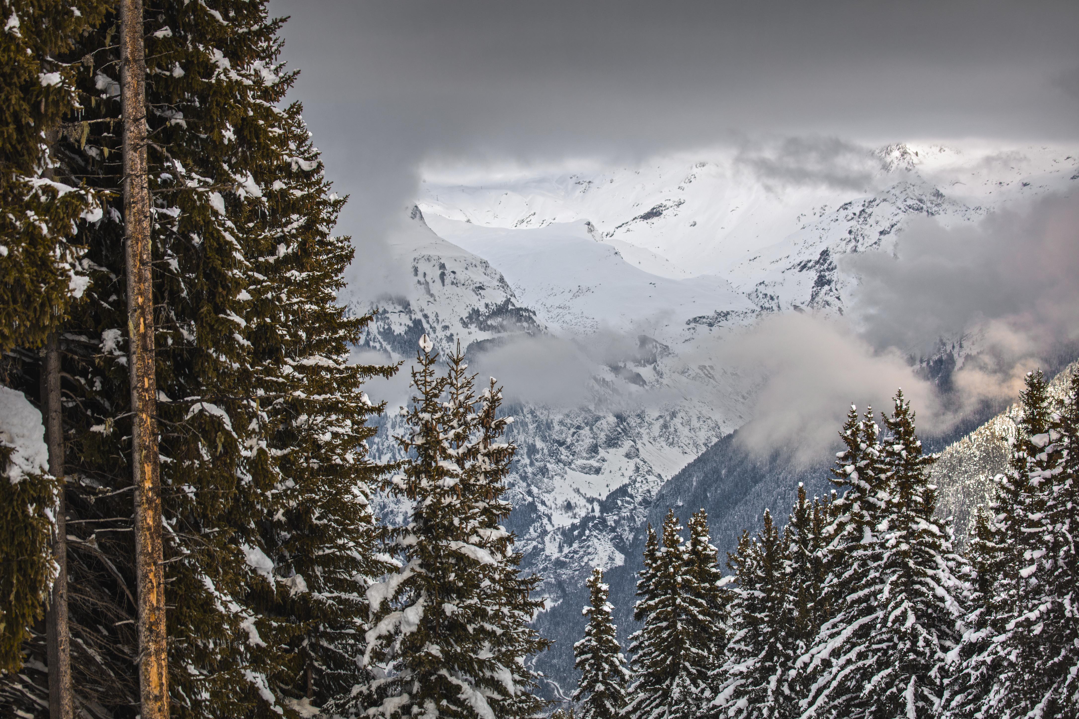 trees skiing