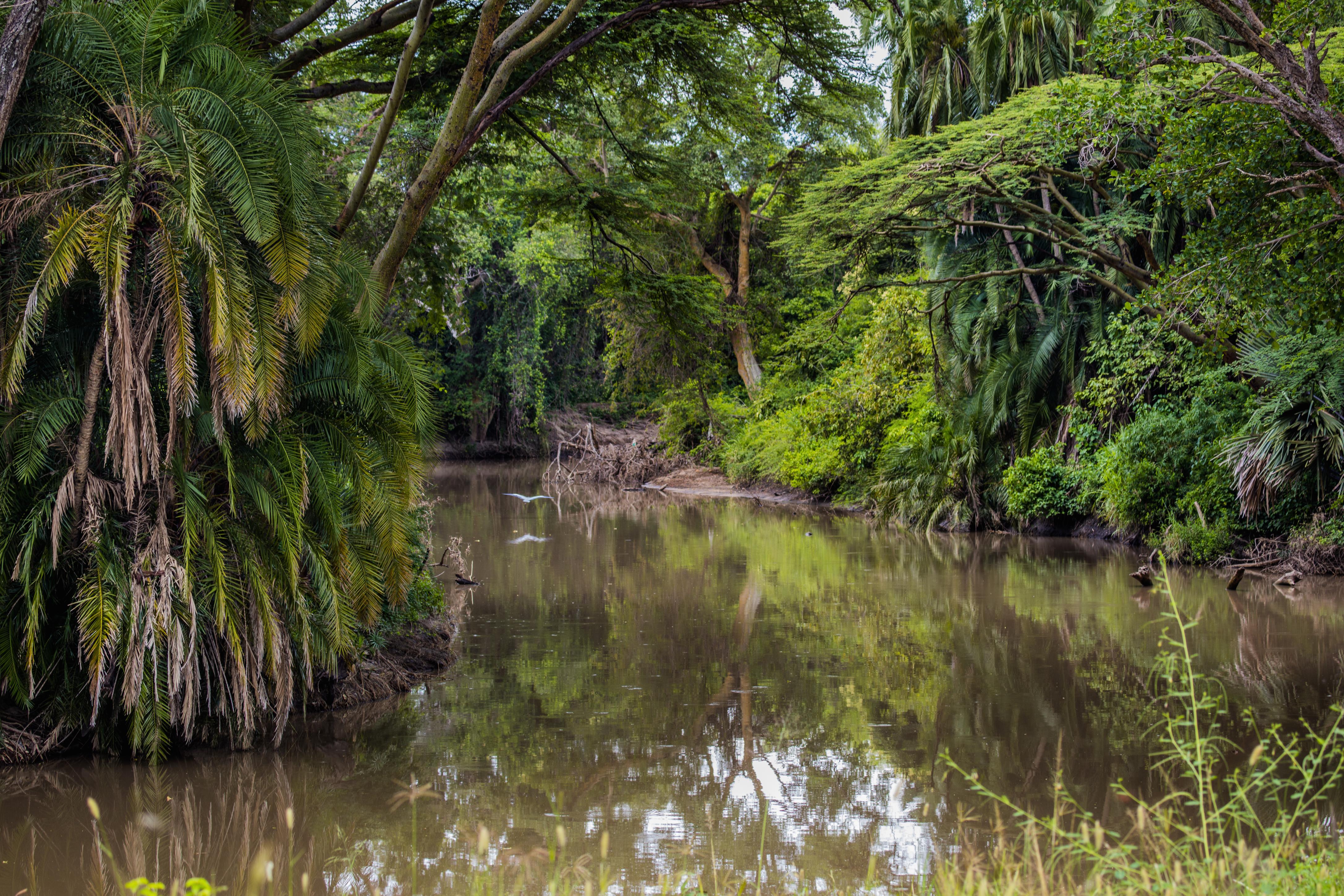 serengetti river