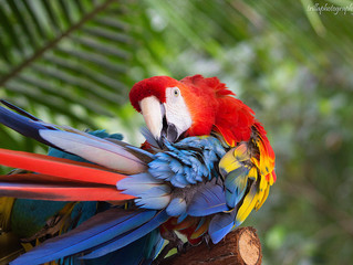Big Bright Macaw Stuns