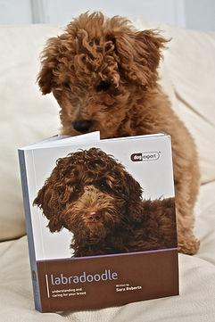 Bruno reading.jpg