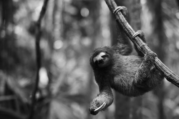 Sloth swing.jpg