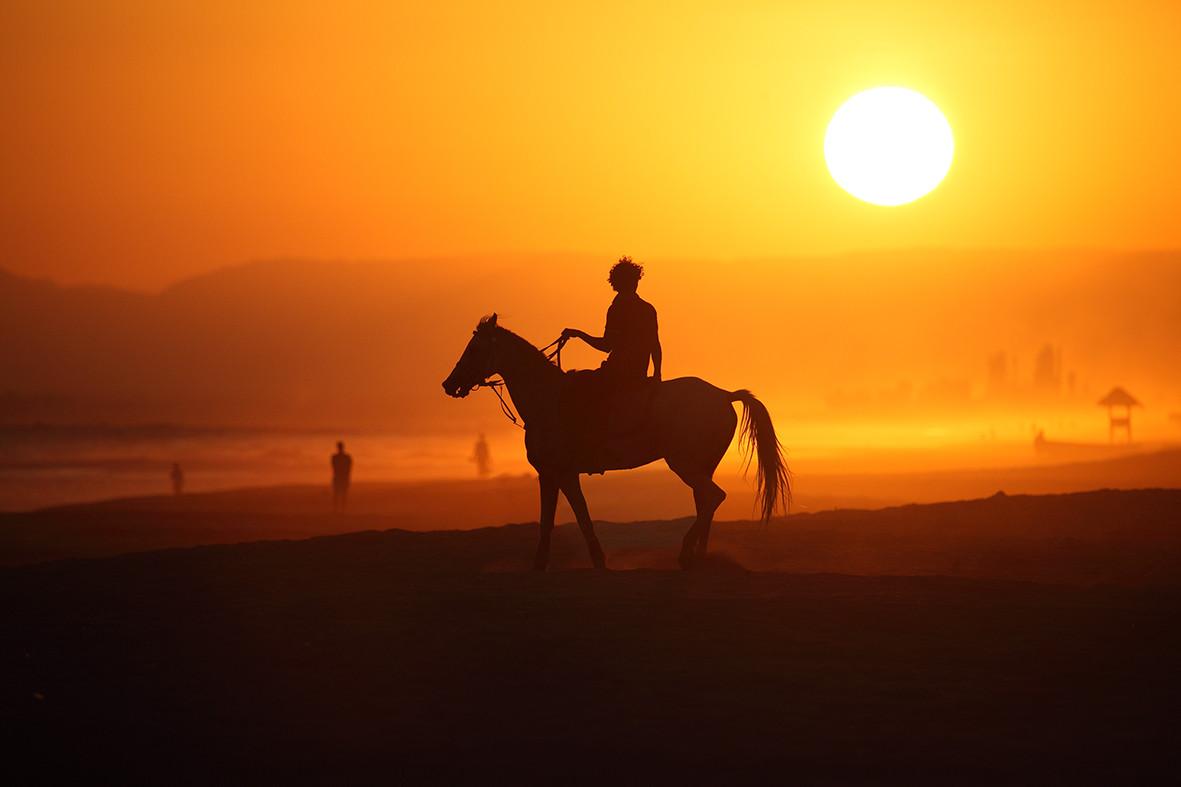 017 Horse 2.jpg