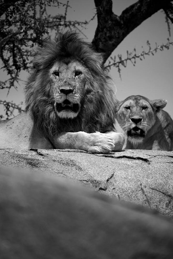 lion rock BW.JPG