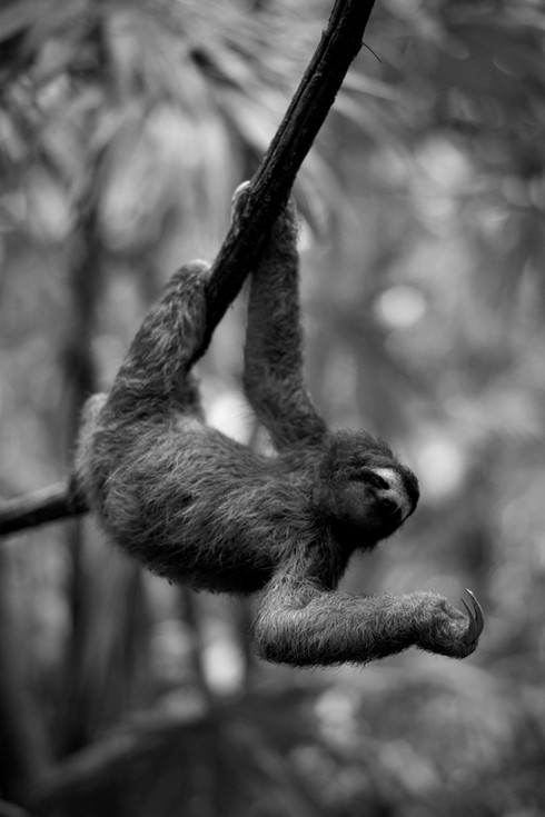 Sloth 2.JPG