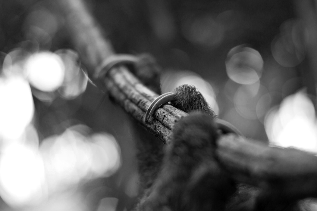 Sloth 5.JPG