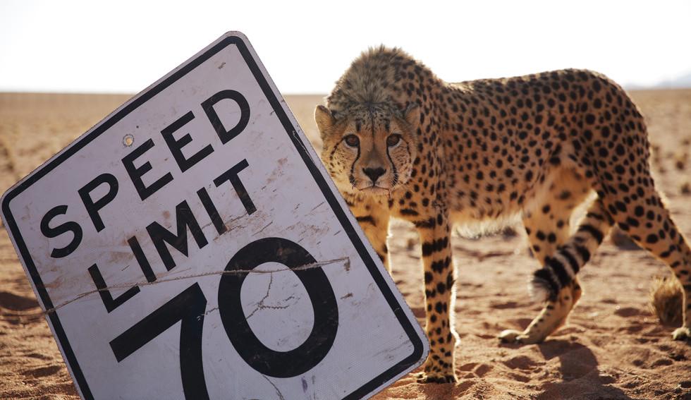 Cheetah sign.jpg