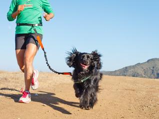 Todos los pro de correr con tu perro