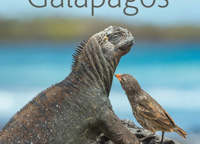A Lifetime in Galapagos by Tui De Roy