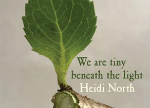 Win a copy of We are tiny beneath the light by Heidi North
