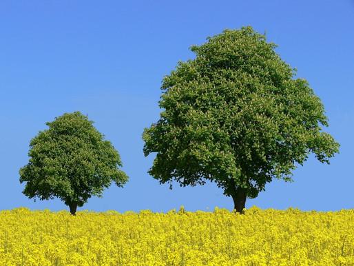 Mindfulness Through The Eyes Of Faith