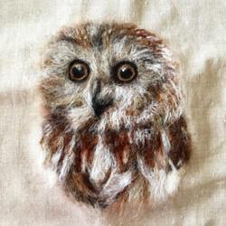 Baby Owl, 2019