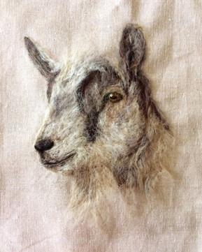 'Billy Goat' 2018